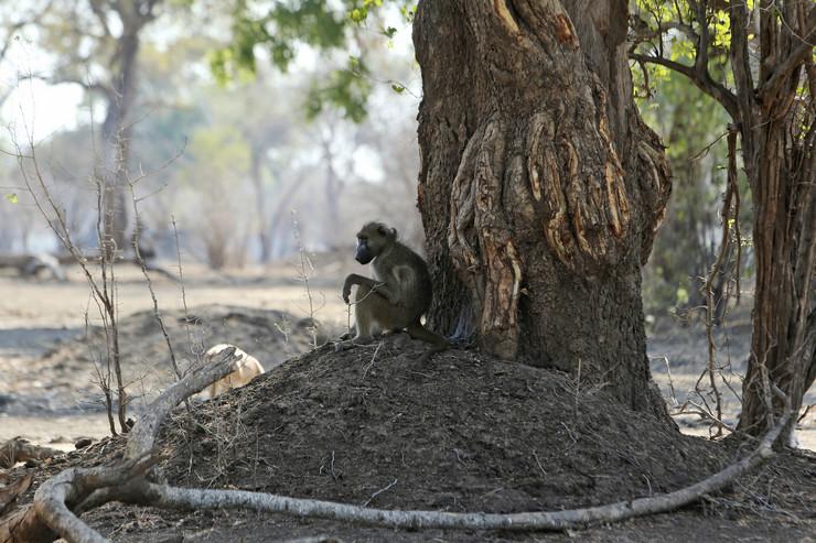pavijan foto ap tsvangirayi mukwazhi