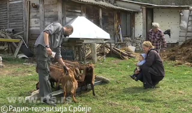 Gajenje koza sve popularniji biznis u Srbiji