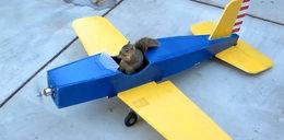 Wiewiórka porwała samolot! FILM!