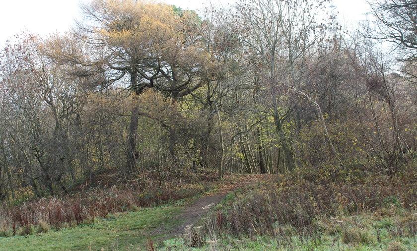 W lesie w pobliżu Edynburga znaleziono pakunek, w której była zakrwawiona dziecięca czapeczka