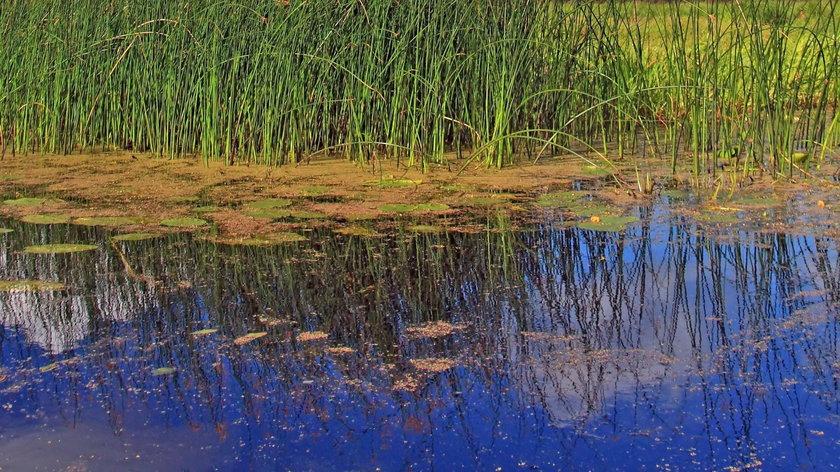 Zwłoki na dnie jeziora
