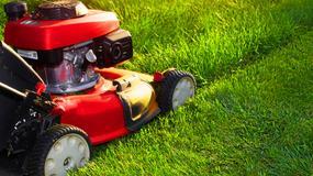 Nawet 2800 złotych kary za wysoką trawę w prywatnych ogrodach