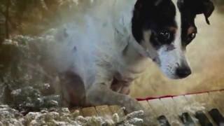 """Twórczyni filmu """"Serce psa"""": Słowa nie są doskonałe, a czasami wręcz zbędne"""