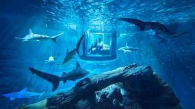 Nietypowy hotel w Paryżu. W śnie przeszkadzają... rekiny