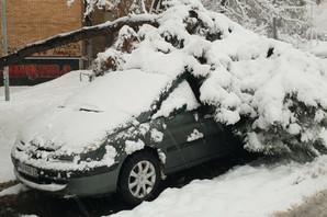 PALO VAM JE DRVO NA AUTO? Evo šta treba ODMAH da uradite!