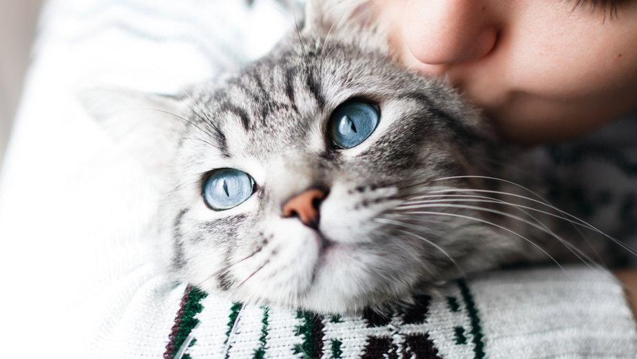 Koty świetnie opanowały sztukę komunikacji