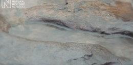 Ludzkie ślady sprzed miliona lat