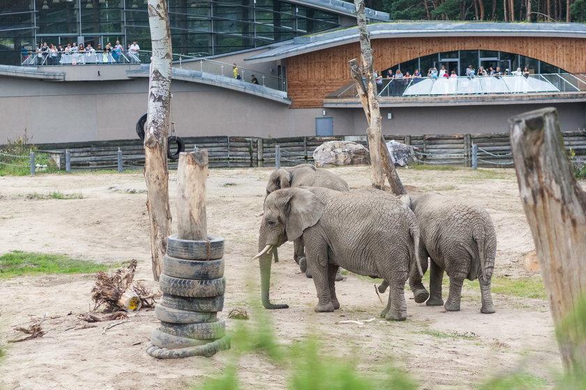 Symboliczne palenie kości słoniowej w poznańskim zoo