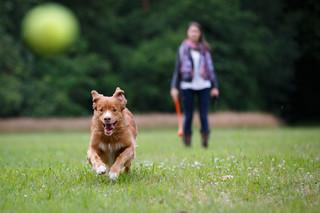 Od soboty wyższe kary za psa bez odpowiedniego dozoru