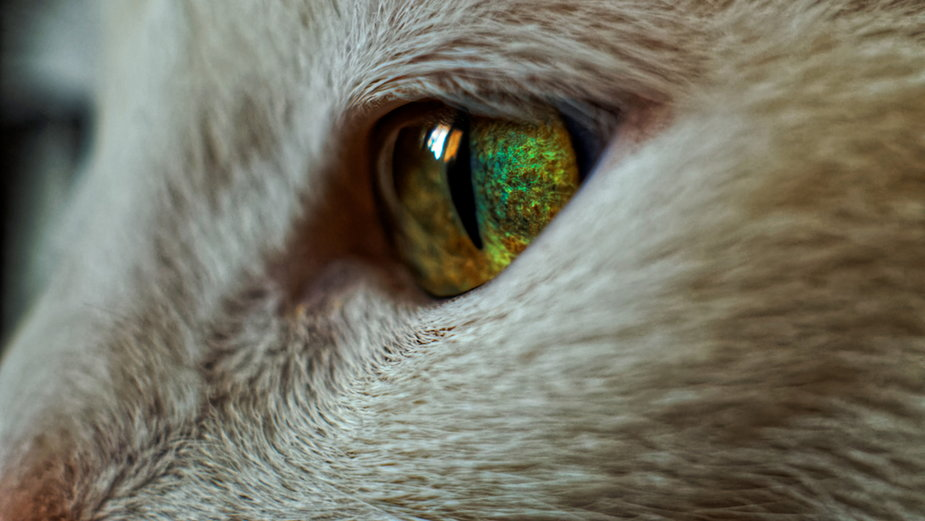 Wiesz, dlaczego kocie oczy świecą w ciemności?