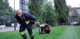 Strażacy ćwiczą do mistrzostw