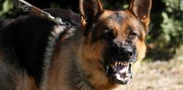 Potraktujesz tak psa, to będzie surowa kara