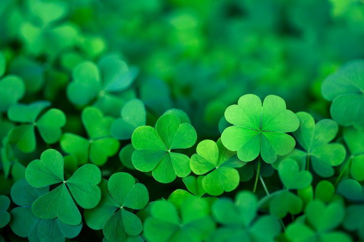 stock-photo-lucky-irish-four-leaf-clover-in-the-field-for-st-patricks-day-1299547732