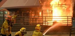 Rośnie liczna ofiar pożarów w Kalifornii. Zagrożone rezydencje celebrytów w Malibu