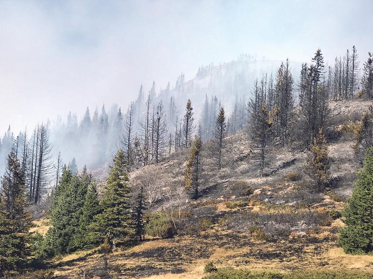 Vatrogasci i meštani uspeli su da odbrane najveće četinarske šume pravljenjem tampon-zona, a stradala su stabla po njihovom obodu