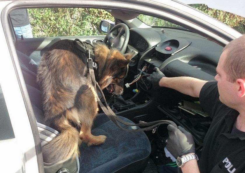 Policyjny pies Ares znalazł w aucie marihuanę