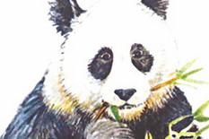 62066_panda