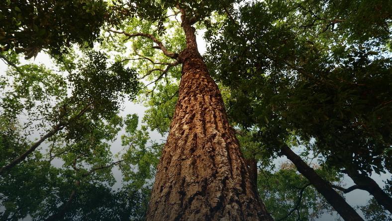 Możliwe, że rozmaite gatunki drzew kontaktują się między sobą, nawet jeśli traktują się jak konkurencję.