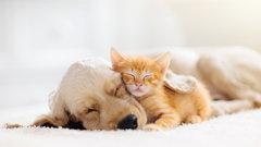 Zwierzęta – psy, koty i inne