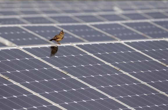 Solarni paneli pogubni za ptice