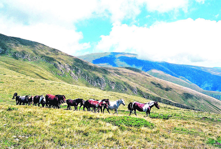 Tokom tri decenije rada vladimir poseduje najveću zbirku i foto i video materijala o Staroj planini