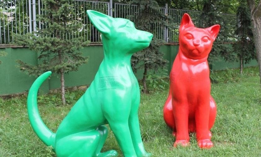 Pies i kot błąkają sie po Poznaniu