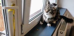 Bielsko-Biała: musieli wezwać strażaków, bo kot spłatał im figla