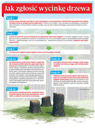 Koniec Lex Szyszko: Jak zgłosić wycinkę drzewa
