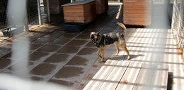 Pomóż zwierzakom przetrwać zimę. Schronisko Promyk prosi o wsparcie