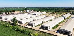 Ukraińska ekspansja zagraża polskim rolnikom?
