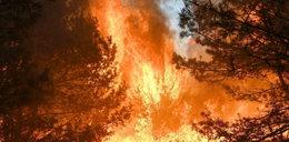 Przez grilla spłonął kawał lasu. Studenci muszą zapłacić 27 mln euro kary!