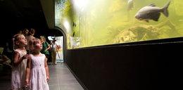 Podwodny czad! Zobacz gliwickie akwarium!