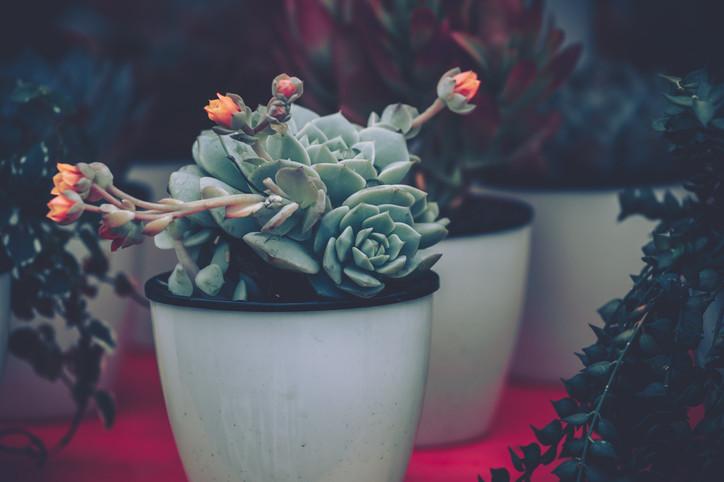 Piękne I Modne Rośliny Doniczkowe Najpopularniejsze Na