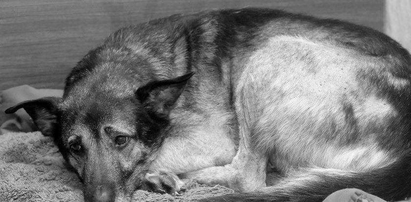 Zakatowali psa szpadlem i cegłą. Kara więzienia dla oprawców