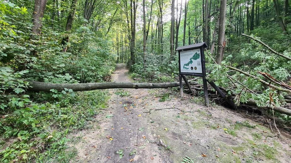 Mieszkańcy apelują do Miasta o rewitalizację Lasu Witkowickiego