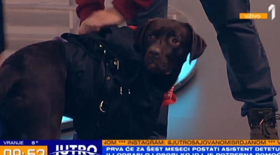 Pas Prva u studiju TV