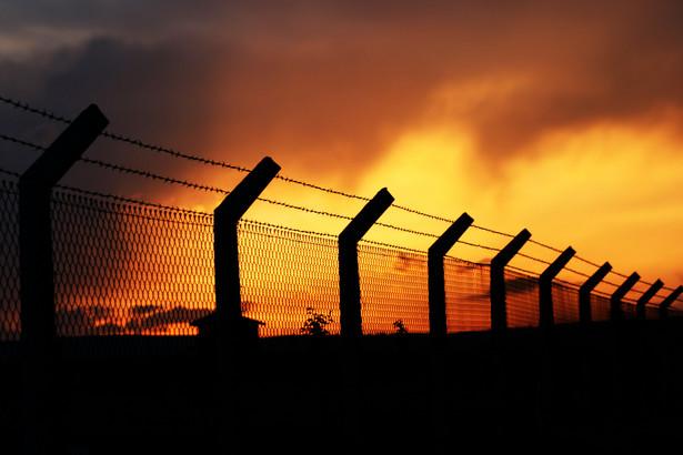 Drut kolczasty. Fot. Shutterstock.