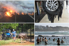 NEZAPAMĆENI VRELI TALAS Životinje umiru od vrućine, asfalt se topi - BUKVALNO (FOTO)