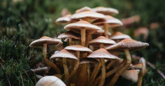 Denver will den kriminellen Drogen-Ruf halluzinogener Pilze verbessern