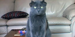 Kot Yoda żyje z dwiema parami uszu. Ma już 13 lat!