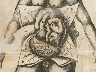 L0051871 Illustration of woman in utero