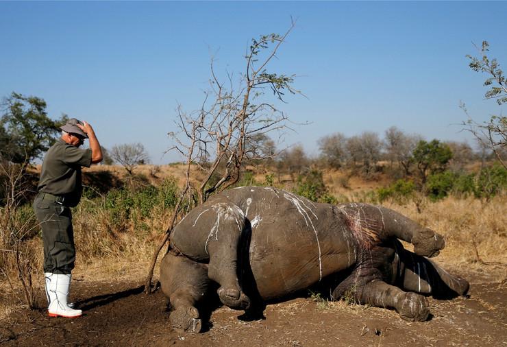 Nosorog, Smrt, Divlje životinje