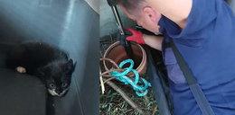 Jak strażnicy kociaki ratowali... Te zdjęcia roztopią ci serce!
