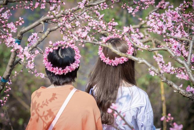 Cveti se kod nas obeležavaju sa posebnom radošću