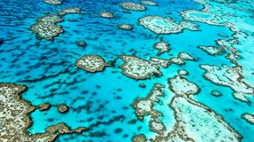 Czy nowy pomysł naukowców uratuje australijską Wielką Rafę Koralową?