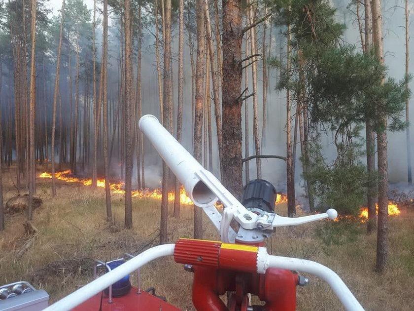 A forest fire is seen in Treuenbrietzen