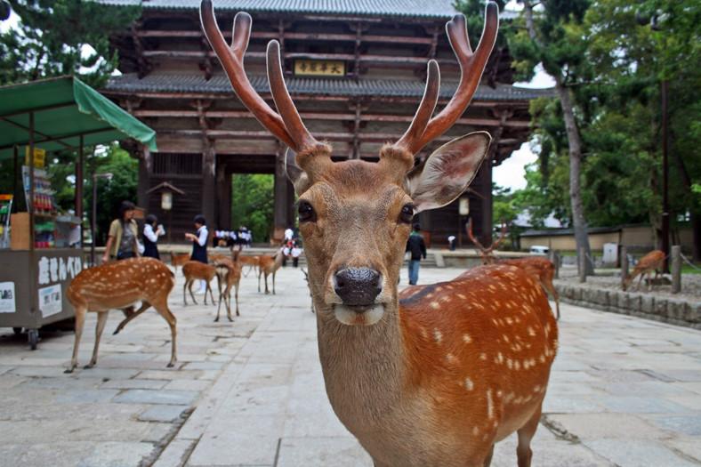 Japonia: Miejsca, których nie można pominąć podczas podróży