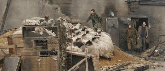 Stado ovaca napravilo je pravi haos na snimanju