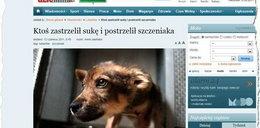 Lublin: Przestrzelił udo szczenięciu, a matkę psiaka ubił!