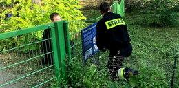 Strażacy uratowali jeża